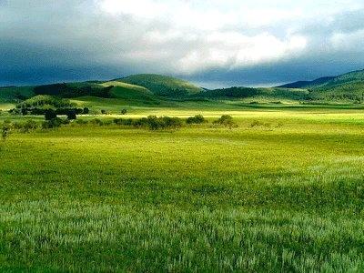 Velds grasslands animals